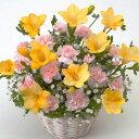 【春のお花・アレンジ・フリージア】お祝い・お誕生日・結婚お祝・出産お祝・開店祝・結婚記念日・お礼・発表会・季節のお花・お返しプ…