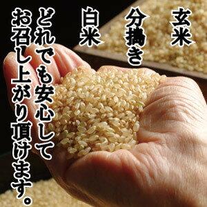 コウノトリ育むお米減農薬玄米1キロあたり