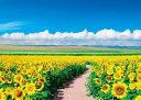 EPO-05-086 風景 青空に輝くヒマワリ畑-北海道