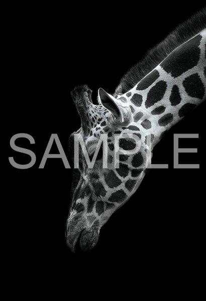 EPO-71-685ペット・動物TheZoologicalGarden〜言葉のない対話〜キリン300ピースジグソーパズル