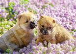 EPO-01-073ペット・動物ひなたぼっこ犬108ピース●予約ジグソーパズル