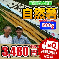 【静岡県牧之原産】こだわりの栽培の自然薯約550g【税込・送料別】【楽ギフ_のし宛書】