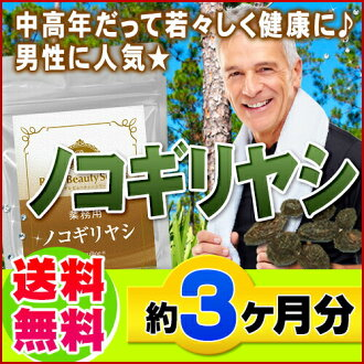 Economy Pack Saw Palmetto 90 pieces Made in Japan *NO Cancellation,Return,Refunds and Exchange*