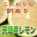 天草産露地物レモン、つまり国産レモンです。自然農薬2回だけ! 有機JASなら農薬無し天草産〔露...