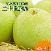 送料無料二十世紀梨鳥取県二十世紀梨東郷秀品5kg2L(16玉)