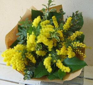 ミモザのブーケ【早春を告げる鮮やかな黄色いお花 ミモザをボリュームいっぱいに束ねました】