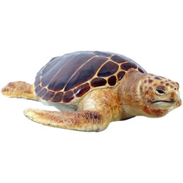 カメ置物インテリア 動物亀産卵場所を探すアカウミガメ / Loggerhead Turtle