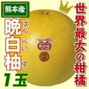 熊本八代産 晩白柚ばんぺいゆ1玉