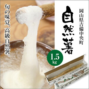 【送料無料】【お歳暮】【ご贈答用】高級自然薯(じねんじょ)1.5kg化粧箱入り^