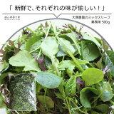 ミックスリーフ大袋500g 単品野菜 岡山県真庭産 大塚農園 サラダ野菜