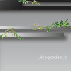 【壁飾り】plusDECO「プラスデコ ダブルS&M」W1210〜1800壁面に描く二重ライン。ハコトコシリ...