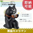 デコレコンコンブル(decoleconcombre)旅猫黒猫カメラマン