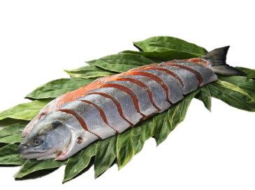〔金沢 味の十字屋〕紅鮭姿切り