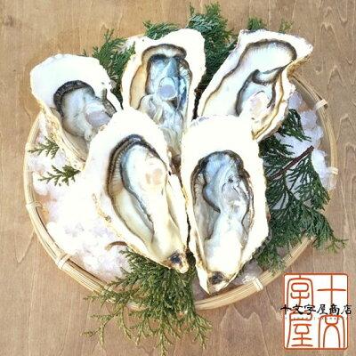 【送料無料】宮城県産殻付き牡蠣30個