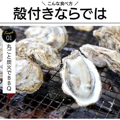 冷凍殻付き牡蠣送料無料1kgsos