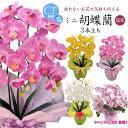【母の日 花 胡蝶蘭