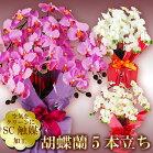 胡蝶蘭造花5本立ち