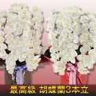 ハイグレード胡蝶蘭3本立ち白1