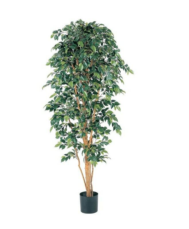 180cmフィカスツリー(ナチュラルトランク)【観葉植物 造花 CT触媒/光触媒 フェイクグリーン】[D-F]:神戸花物語