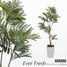 フェイクグリーンエバーフレッシュ175cm鉢植ネムノキ【人工観葉植物造花光触媒SC/CT触媒フェイクグリーン】