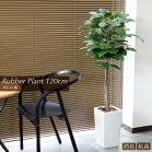 ゴムの木ラバープラント120cmお部屋で場所をとらない【SC触媒】【人工樹木】【フェイクグリーン