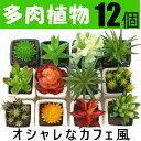 観葉植物 フェイクグリーン サボテン・多肉植物を含む12個セット 送料無料 吊り下げ、壁掛け miniの写真