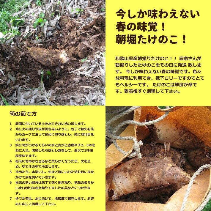 たけのこ 和歌山県産 朝堀り筍 約4kg ぬか付き  訳あり