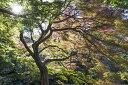 アートパネル 10cm単位でサイズオーダーできる 絵画 壁掛け インテリア 壁飾り キャンバス アート ウォール 木 森 新宿御苑 e313191