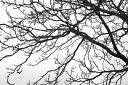 木 枝 シルエット モノクロ モノトーン 白 黒 ホワイト ブラックの壁紙 輸入 カスタム壁紙 PHOTOWALL / Black and White Tree (e19110) 貼ってはがせるフリース壁紙(不織布) 【海外取り寄せのため1カ月程度でお届け】 【代引き不可】 1
