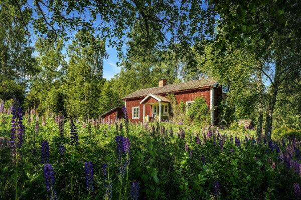 コテージ 建物 小屋 風景 景色の壁紙輸入 カスタム壁紙 PHOTOWALL / Lupin Cottage (e310119)貼ってはがせるフリース壁紙(不織布)【海外取り寄せのため1カ月程度でお届け】【代引き不可】