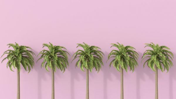 壁紙・装飾フィルム, 壁紙  PHOTOWALL Palm Tree (e317961) () 1