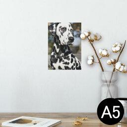 ポスター ウォールステッカー シール式ステッカー 飾り 148×210mm A5 写真 フォト 壁 インテリア おしゃれ  剥がせる wall sticker poster 002587 犬 動物 写真
