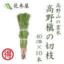 【生花】 高野槙 40cm 10本組 1束 切花
