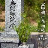 高野槙 切枝 60cm 1本 生花 切花