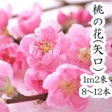 【令和4年1月25日以降の発送】桃の花 桃 ひなまつり 生花 飾り もものはな 矢口桃 100cm 2束 約10本