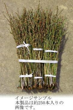 【12月上旬より発送】梅の花 コクセン 花梅 小枝 50cm程度 木の枝 インテリア