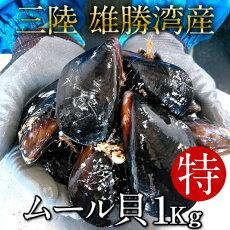 生ムール貝特大1kg三陸宮城県産漁師直送活ムール貝