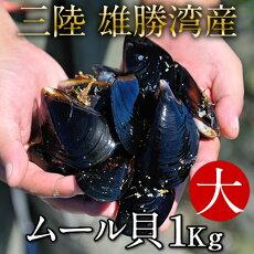 生ムール貝大1kg三陸宮城県産漁師直送活ムール貝