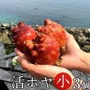 ホヤ 活ほや 雄勝湾産[小]3個活海鞘 活ホヤ三陸宮城県産 漁師直送 バーベキュー BBQ