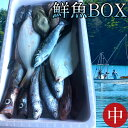 鮮魚 通販
