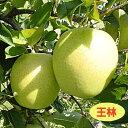 【リンゴ属】りんご王林(接木苗)4号LLポット