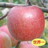【リンゴ属】りんご世界一(接木苗)4号LLポット