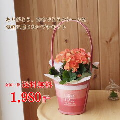 鉢花ギフトシャービーシックなレッドバスケット