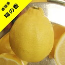 【香酸柑橘系ミカン属】璃の香レモン(接木苗)4号LLポット