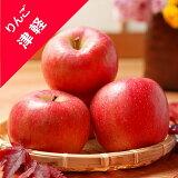 【リンゴ属】りんごつがる津軽(接木苗)4号LLポット
