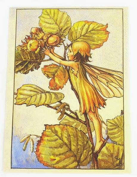 ポストカード★ヘーゼルナッツフェアリー★[FLOWER FAIRY]フラワーフェアリーメッセージカード
