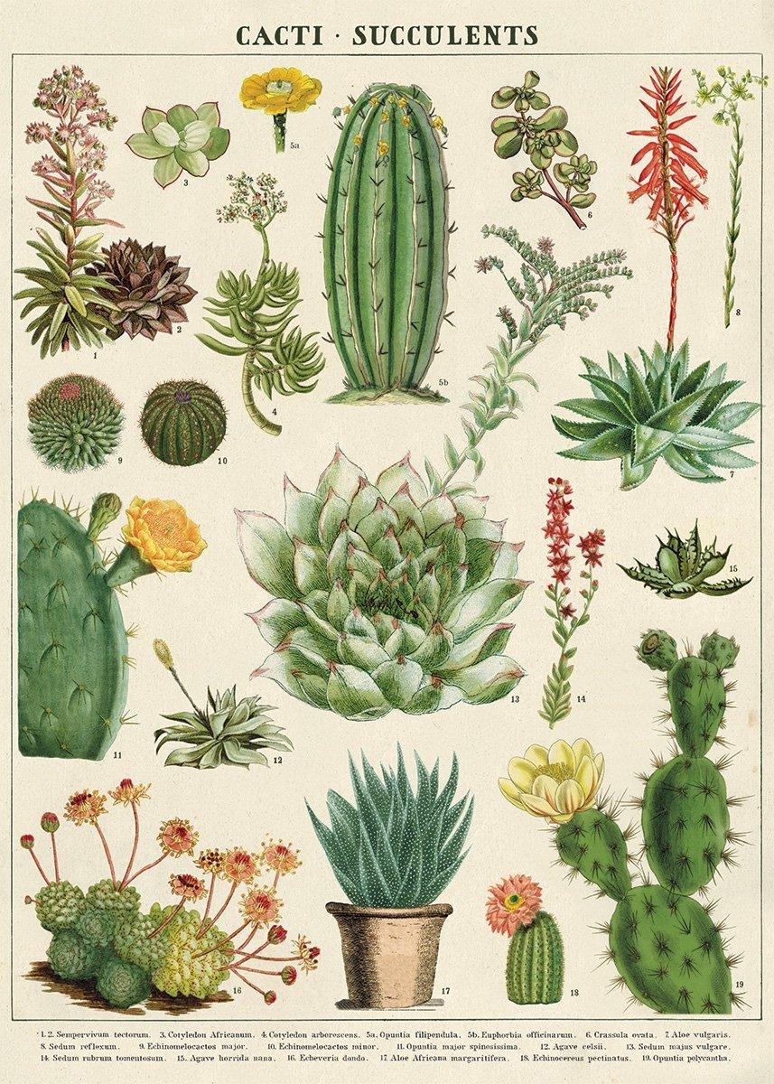 Cavallini&Co 包装紙 ラッピングペーパー サボテン 多肉植物 succulents 輸入包装紙スクラップブッキング・ポスター・カルトナージュ・デコパージュ・ペーパークラフト