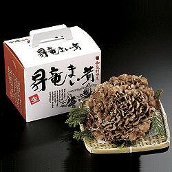 大野昇竜舞茸