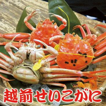 越前せいこがに C10ハイ【送料無料】福井県(名物)越前ガニ ずわい蟹