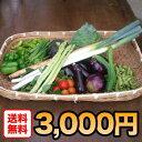 【送料無料】カガヤキ農園直送の新鮮野菜ボックス(Lサイズ)【送料無料】05P26Apr14
